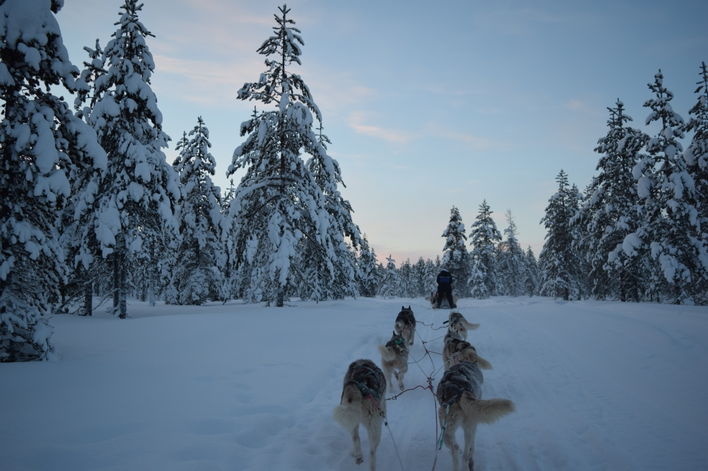 Husky_Sledding_Finland