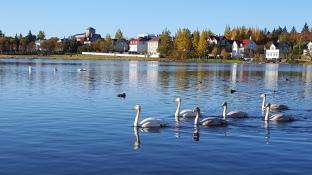 Reykjavik_tjornin_pond