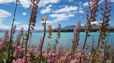 Lake-Tekapo-New-Zealand