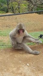 kyoto-monkey-park