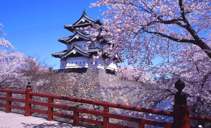 CherryBlossomsinJapan