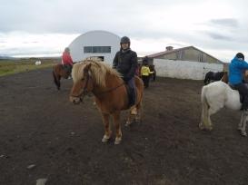 Iceland-horse-riding