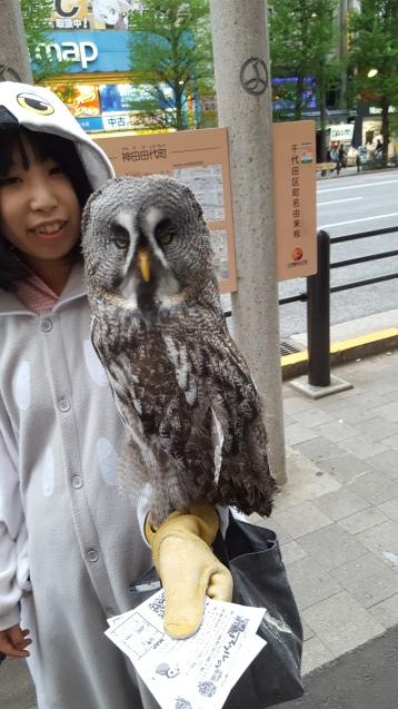 owl-cafe-tokyo