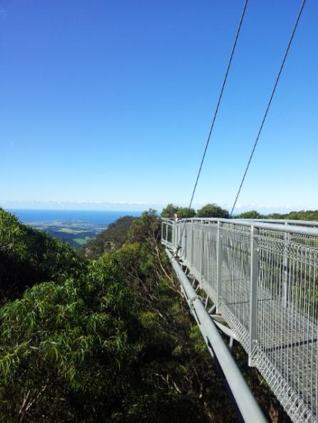 Illawarra-flytop