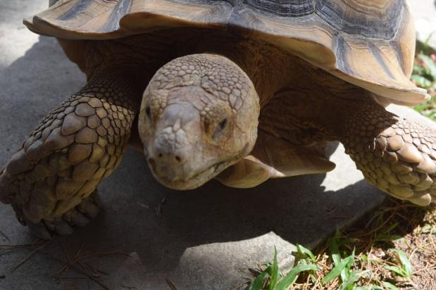 Turtle-museum-singapore