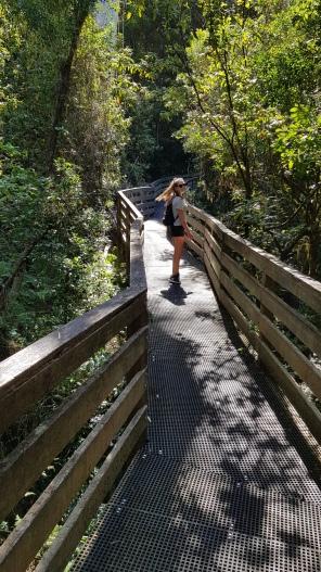Mckenzie Rainforest Walk