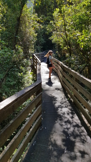 Mckenzie Rainforest Walk