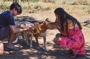 Bushland Dingo Sanctuary